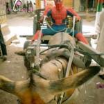 Donkey Spider Man